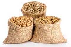 Getreideartkorn Lizenzfreies Stockbild