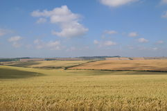 Getreidefeld 2 Stockbild