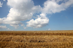 Getreidefeld Stockfotos