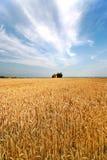 Getreidefeld Lizenzfreie Stockfotografie