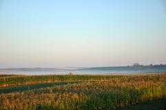 Getreidefeld auf dem Morgensonnenaufgang stockbilder