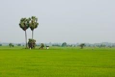 Getreidefeld in der Landschaft von Thailand Stockfotos