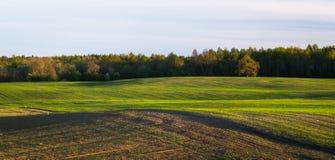 Getreidefeld im Vorfrühling Lizenzfreies Stockfoto