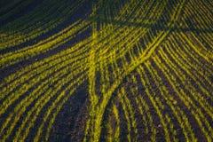 Getreidefeld im Vorfrühling Stockfotografie