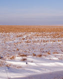 Getreidefeld mit geblasenem Schnee Stockbilder