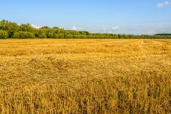 Getreidefeld mit gedroschenem Korn an einem sonnigen Tag Lizenzfreie Stockfotos