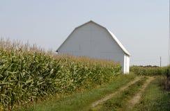 Getreidefeld mit Stall Stockfotografie