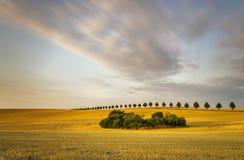 Getreidefeld nach Ernte stockfoto