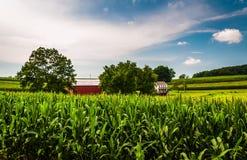 Getreidefeld, Scheune und Haus auf einem Bauernhof in Süd-York County, PA Stockbilder