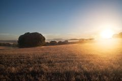 Getreidefeld am Sonnenuntergang Lizenzfreies Stockbild