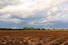 Getreidefeld in thailändischem Stockbilder