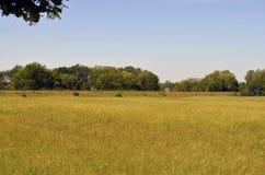 Getreidefeld und Eisenbahn stockfoto