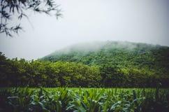 Getreidefeld- und Gebirgsherein Rückseite Lizenzfreies Stockfoto
