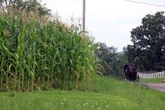 Getreidefeld und Pferd und Buggy Lizenzfreie Stockfotos