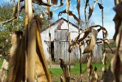 Getreidefeld und Scheune Lizenzfreie Stockfotos