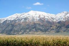 Getreidefeld und Snowy-Berg stockfotografie
