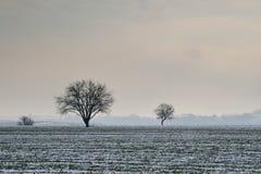 Getreidefeld unter Schnee Stockfotografie
