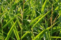 Getreidefelddetail Stockbilder