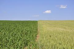 Getreidefelder Stockfoto