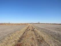 Getreidefelder für Meilen stockfoto
