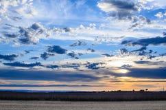 Getreidefelder II Lizenzfreies Stockbild