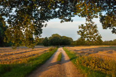 Getreidefelder in Laren, die Niederlande stockbilder