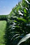 Getreidefeldgras und -himmel Lizenzfreie Stockfotos