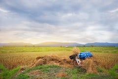 Getreidefeldlandwirt-Reisberg Stockfoto