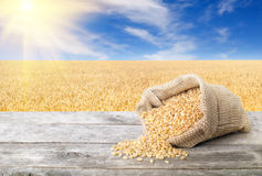 Getreidekörner mit reifem Feld Stockfotografie