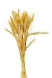 Getreidekorn-Bündel Lizenzfreie Stockfotografie