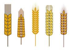 Getreideohren lizenzfreie abbildung