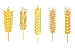 Getreideohren stock abbildung