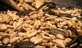 Getreidesammlung 5 lizenzfreie stockfotos