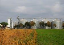 Getreidespeicher hinter einer Baumreihe und einem Feld teilten sich zwischen das Gelb der Herbstbearbeitung und das grüne Gras Stockfoto