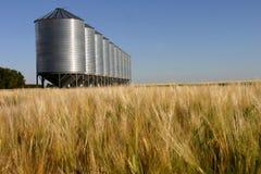 Getreidespeicher nahe einem Feld Stockbild