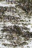 Getrennt auf Weiß Lizenzfreies Stockbild