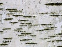 Getrennt auf Weiß Stockbilder