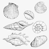 Getrennt auf Weiß mit Ausschnittspfad Übergeben Sie gezogene Vektorillustrationen - Sammlung Muscheln Marinesatz stock abbildung