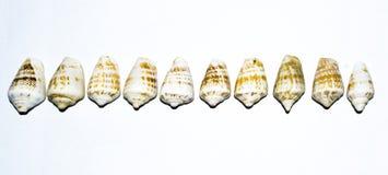 Getrennt auf Weiß mit Ausschnittspfad Lizenzfreie Stockbilder