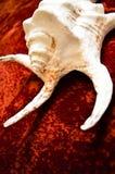 Getrennt auf Weiß mit Ausschnittspfad Stockfoto