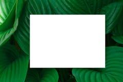 Getrennt auf Weiß Plan mit Beschaffenheit eine grüne Blattnahaufnahme Hintergrund mit Blättern und weißem Rahmen stockfotos
