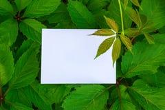 Getrennt auf Weiß Plan mit Beschaffenheit eine grüne Blattnahaufnahme Hintergrund mit Blättern und weißem Rahmen lizenzfreie stockfotos