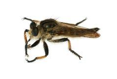 Getrennt jagen-fliegen Sie Stockfotografie