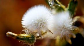 Getrennte Abbildung auf weißem Hintergrund Blumen, die fliegen Stockfoto