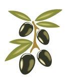 Getrennte Abbildung der Oliven Symbol Stockfotos