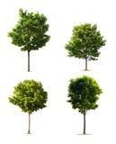 Getrennte Bäume Lizenzfreies Stockbild