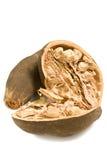 Getrennte Baobab-Frucht Stockbild