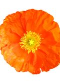 Getrennte Blume Stockfoto