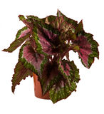 Getrennte Blume im Potenziometer Stockfoto