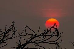 Getrennte Phoenix-Abbildung Stockfoto